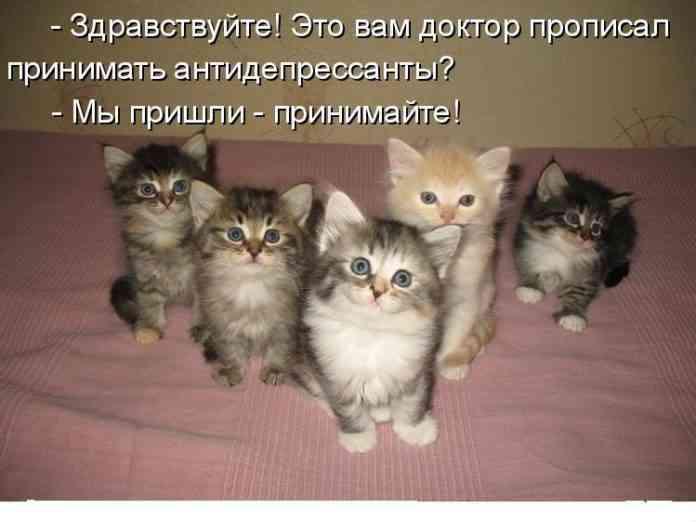 kitten 101