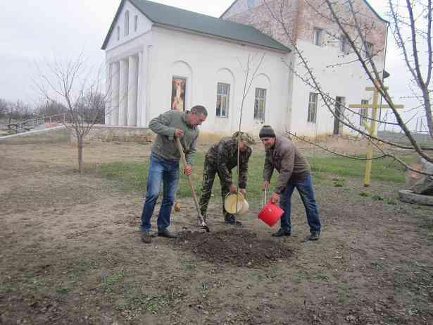 Западный Донбасс зацветет сакурами