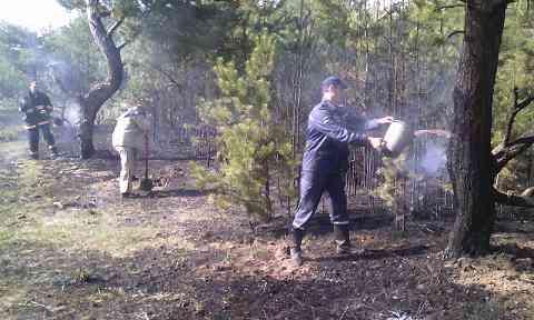 Павлоград начинает считать лесные пожары
