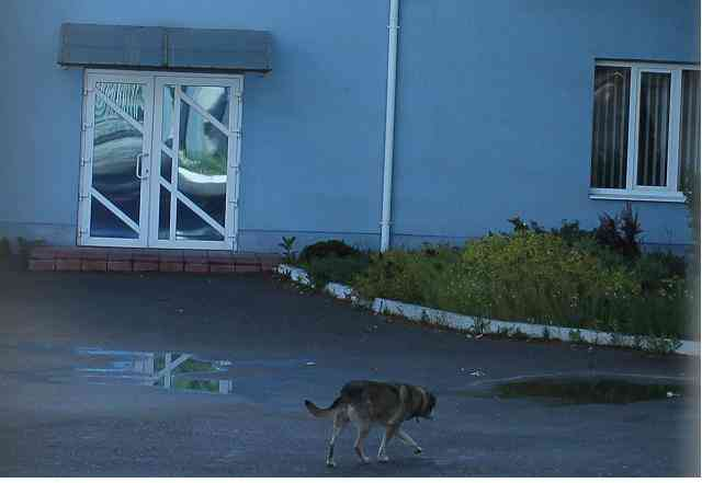 Бизнес должен встать на колени: правоохранители в Павлограде захватили успешное предприятие