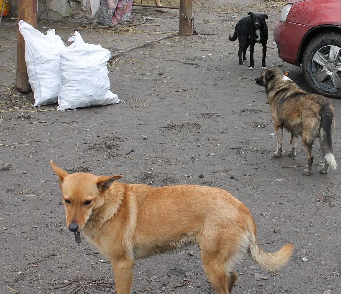 В Терновке неизвестный мужчина разбрасывает отравленное мясо: уже погибло 16 собак