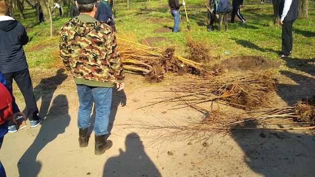 Сотрудники ДТЭК Павлоградуголь посадили в парке им. 1-го Мая 2000 саженцев березы, дуба, софоры, акации