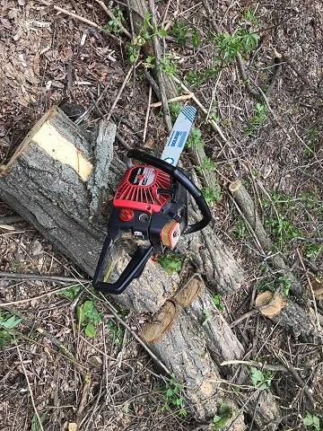 На Юр'ївщині поліція пов'язала двох лісорубів
