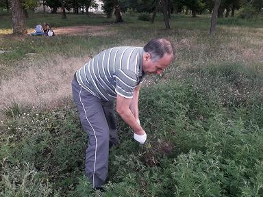 Павлоградцы вразнобой начинают зачистку города от амброзии