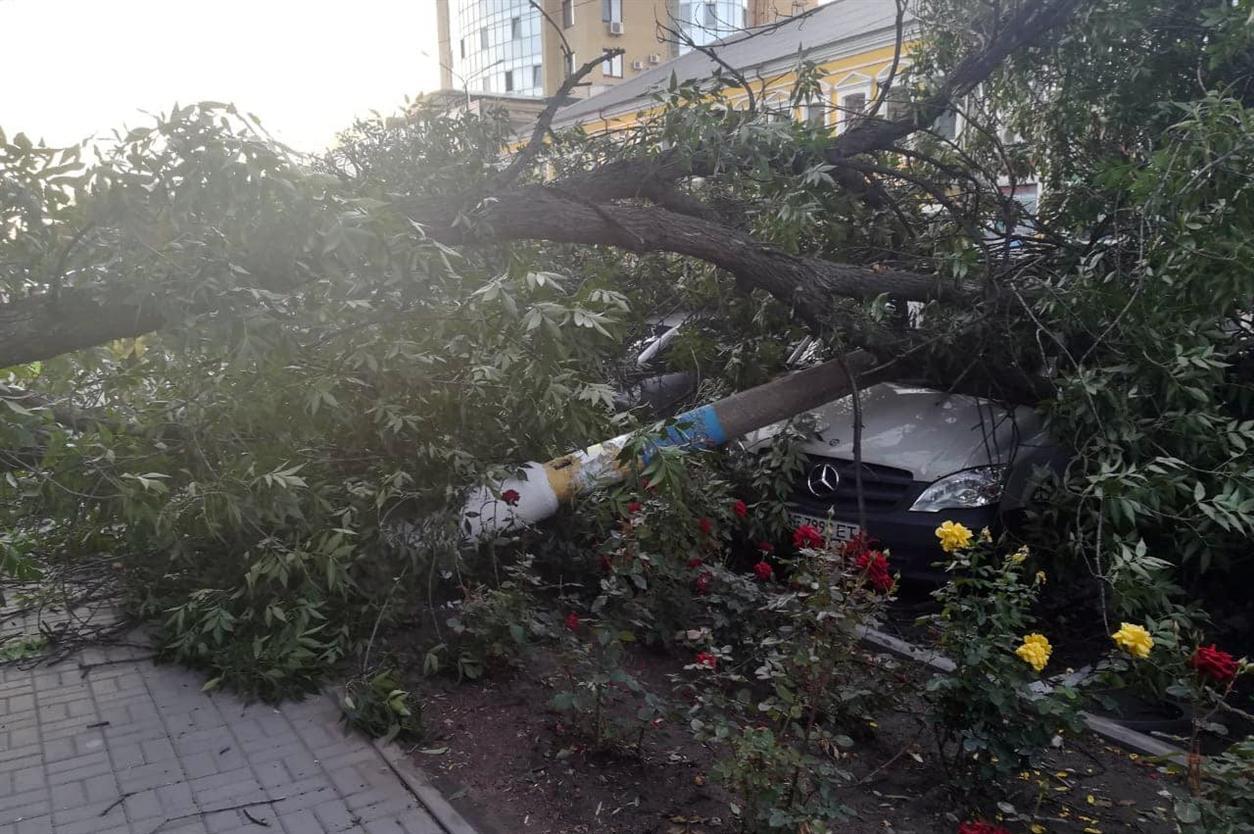 Три автівки привалило деревом в Павлограді