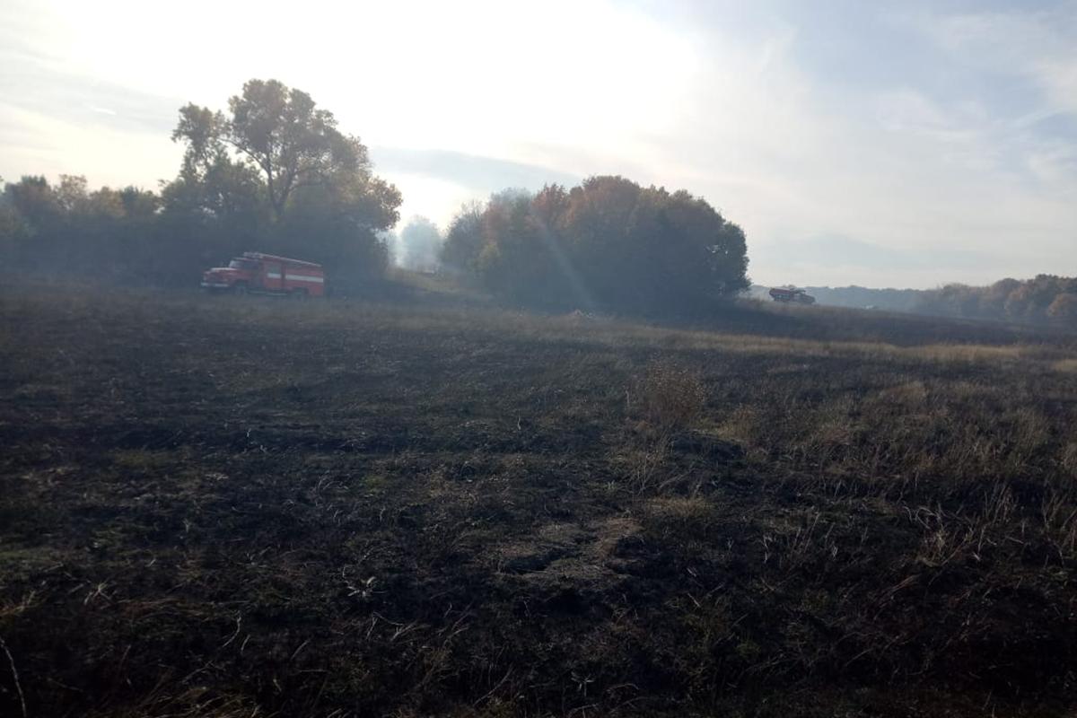 Из-за сильного ветра под Павлоградом сгорело 2 га сухой травы и камыша