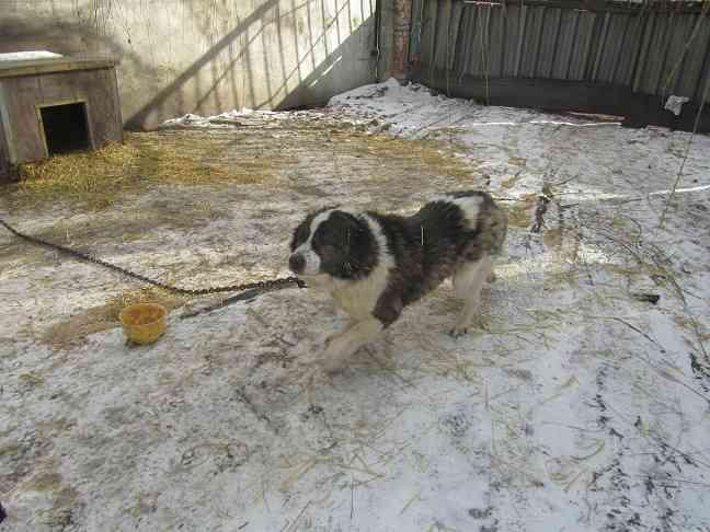 Волонтенры Павлограда стерилизовали 3000 собак, -  им непонятна работа городского приюта для бездомных животных