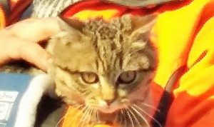 В Павлограде спасали кота