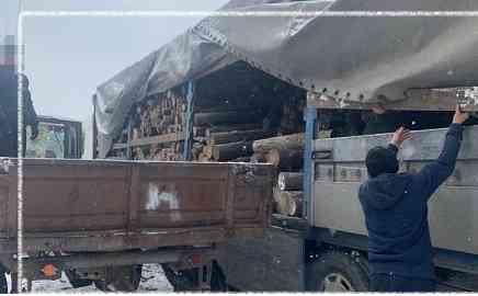 Только одна преступная группа нарубила дров в лесах Днепропетровщины на 2,6 млн. гривен