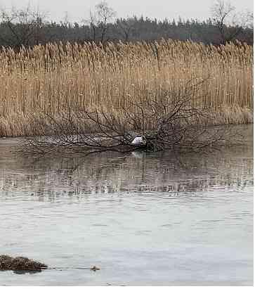 Ради удачной рыбалки, лед Самары заваливают ветками