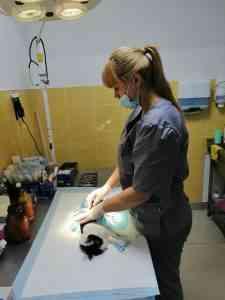 """В ветеринарном кабинете """"Центр"""" помогут домашним любимцам."""