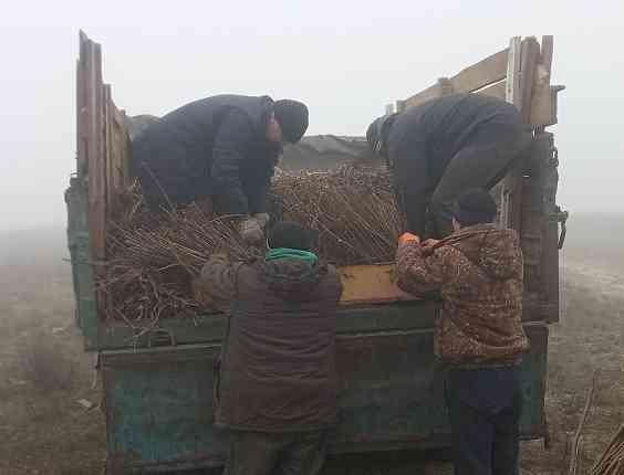 Сосны в Павлограде не выдерживают ежегодных засух, - лес пополнят 75 000 саженцев акации  и 7 000 саженцев маслины