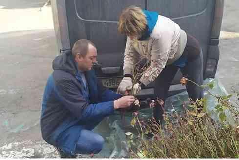 Терновские педагоги не знают, как защитить  от хапуг школьные розы