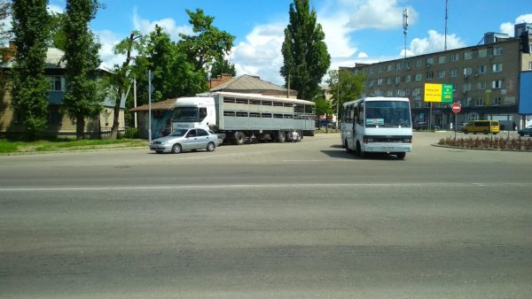В Павлограде застряло стадо баранов