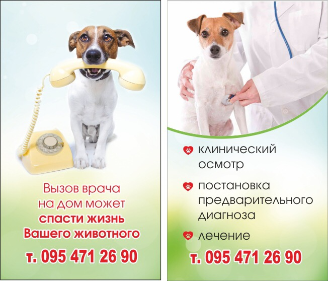 """В ветеринарном кабинете """"Центр"""" лечат ласковых кошек и веселых собак"""