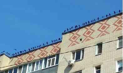 Страшные птицы сожрали в Павлограде скворцов и лягушек