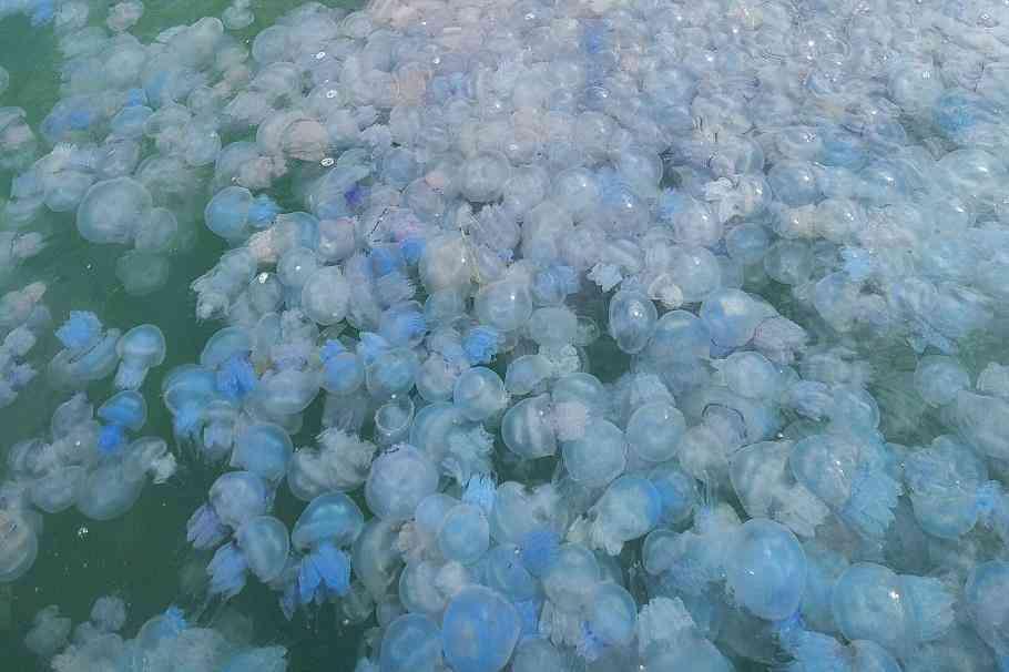 Неизвестные  силы засолили Азовское море, - дети тоннами грузят медуз в грузовики